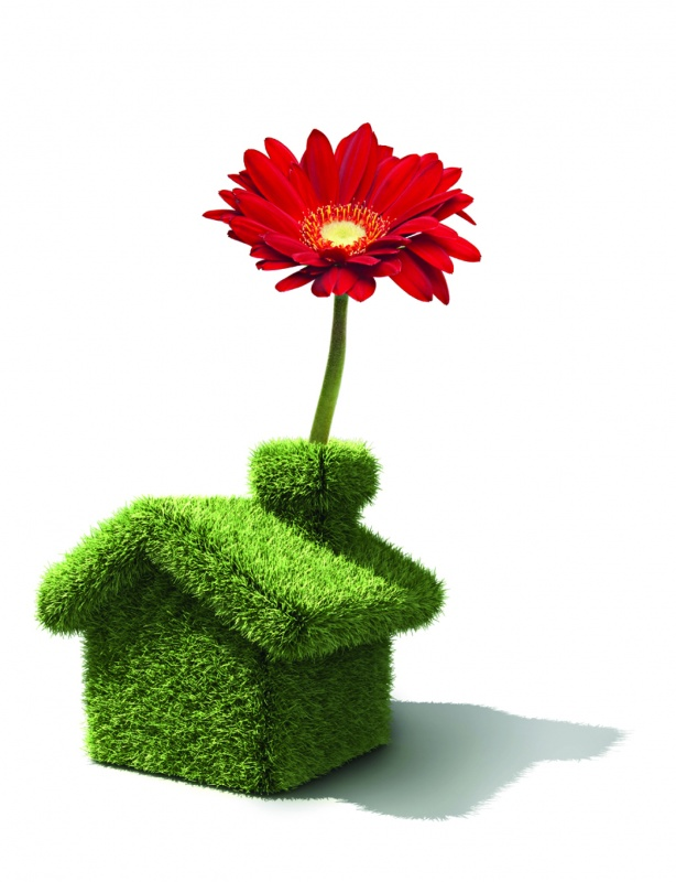 maison fleur
